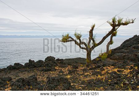 Lifeless Landscape Of Volcanic Island
