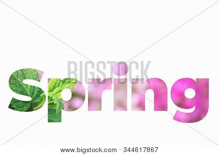 Spring Lettering Word Made Of Mint Leaves And Pink Flowers On Isolated White Background.