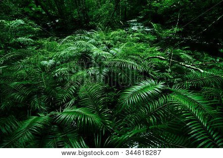 Tropical Fern Bushes Background Lush Green Foliage In The Rain Forest With Nature Plant Tree And Wat