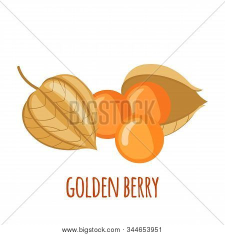 Golden Berry Or Physalis Vector Icon In Flat Style Isolated On White Background.