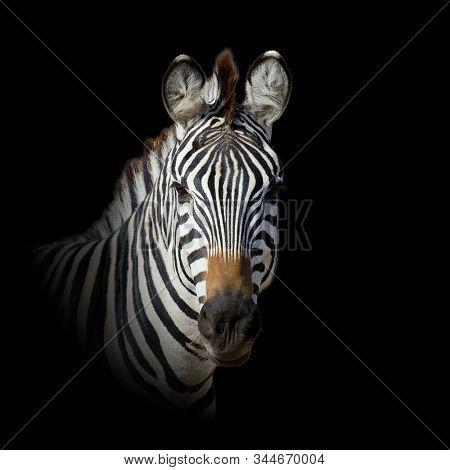 Close Up Animal Portrait Isolated On Dark Background