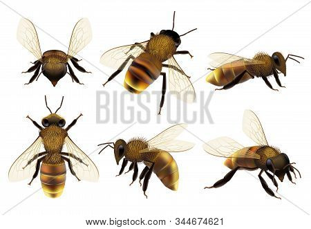 Honeybee Realistic. Different Wildlife Danger Insects Flying Wasp Natural Botanical Fauna Vector Clo