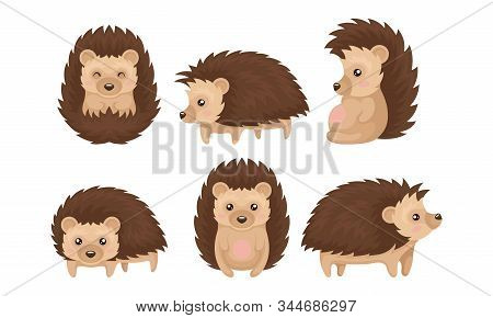 Cute Hedgehogs In Various Poses Vector Set. Friendly Forest Creature Collection