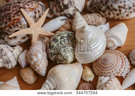 Seashells And Starfish Background And Texture For Design. Many Different Seashells Piled Together. O