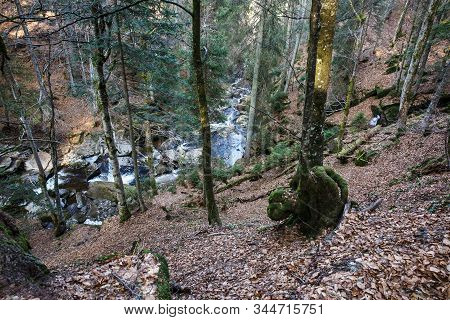 Wild Forest With Creek. Tree With Gnarl. Ecology, Natural Environment And Biomass Concept.