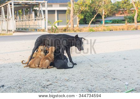 Homeless Black Dogs. Puppies Suck Mother's Milk. Life Of Hungry Stray Dogs