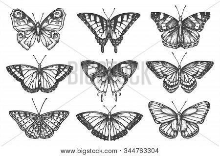 Set Of Isolated Sketch Of Butterfly. Hand Drawn Tattoo Of Moth. Swallowtail And Gossamer-winged, Ski