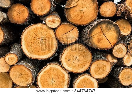 Wood Logs For Sale Use In Fire Place At Home Stored On Forest Woods Green Biomass Energy