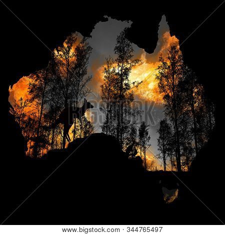 Australia Fires: The Animals Struggling In The Crisis. 480 Million Animals Are Being Directly Affect