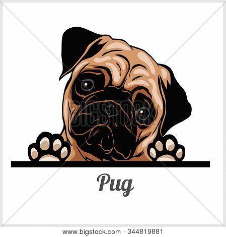 Pug - Peeking Dogs - Breed Face Head Isolated On White