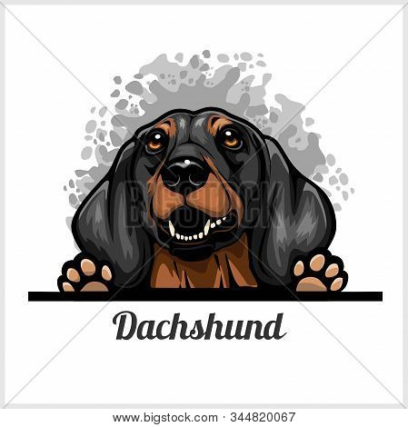 Dachshund - Peeking Dogs - Color Breed Face Head Isolated On White