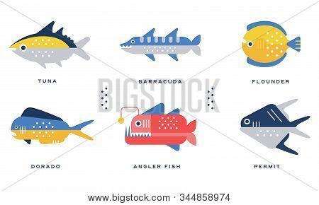 Sea And Ocean Fishes Collection, Tuna, Barracuda, Flounder, Dorado, Angler Fish, Permit Vector Illus