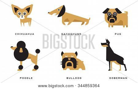 Breeds Of Dogs Collection, Chihuahua, Dachshund, Pug, Poodle, Bulldog, Doberman Vector Illustration