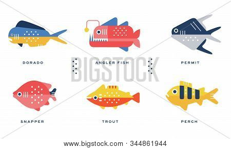 Sea And Ocean Fishes Collection, Dorado, Angler Fish, Permit, Snapper, Trout, Perch Vector Illustrat
