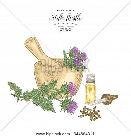 Milk Thistle Plant Hand Drawn. Thistle Flowers And Seeds With Wooden Mortar And Glass Bottle. Medici