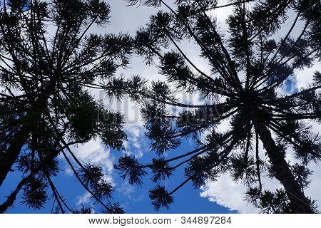 Duas árvores Contra A Luz, Formando Sobra Em Contraste Com O Céu