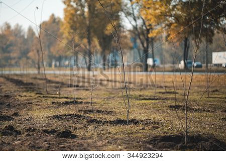 Green Garden With Young Fresh Planted Trees