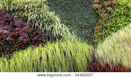 Vertical Garden Of Various Plants