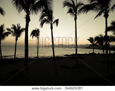 Palm Trees An Sunset In Puerto Del Carmen, Lanzarote, Canary Islands. Travel And Nature Concept.