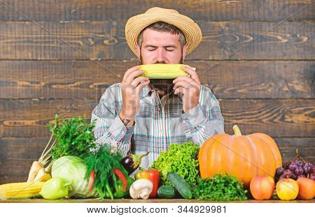 Community Gardens And Farms. Healthy Lifestyle. Farmer Hold Corncob Or Maize Wooden Background. Farm