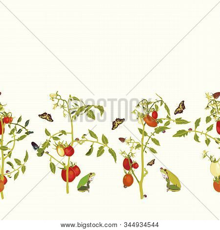 Vector Realistic Botany Tomato Garden Repeat Border With Tomato Plant, Butterfly, Frog, Ladybug. Ele