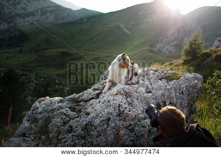 A Man Photographs His Dog On A Background Of Beautiful Landscapes. Owner Of An Australian Shepherd O