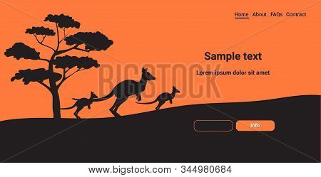Silhouettes Of Kangaroos Running From Forest Fires In Australia Animals Dying In Wildfire Bushfire N