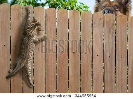 Funny kitten hanging on fence and big dog behind