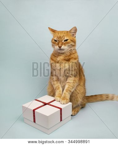 Red Cat Is Looking At The Camera. Pictures Of Cats, Cat Eyes, Cute Cat, Drawings Of Cats, Drawings O