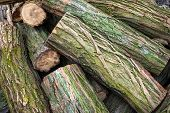 Closeup logs covered with moss. Cut a stack of logs. Stack of firewood. Woodpile of chopped logs prepared for the fireplace. Firewood for the fireplace. Background of firewood. Firewood for the winter poster