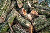 Logs for firewood. Cut a stack of logs. Stack of firewood. Woodpile of chopped logs prepared for the fireplace, selective focus. Background of firewood. Firewood for the winter. poster