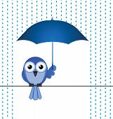 Bird sheltering from the rain isolated on white background poster