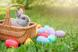 Little Bunny And Eggs In Basket On Spring Green Grass. Cute Rabbit. Easter Egg Hunt With Pet Bunny.