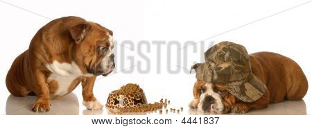 Bulldog Not Sharing Food With Another