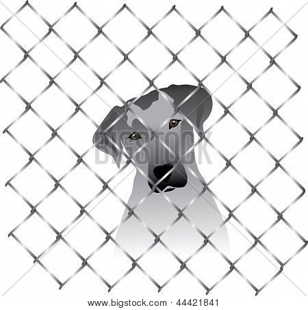 Shaded dog silhouette behind fence