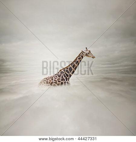 Giraffe In The Sky