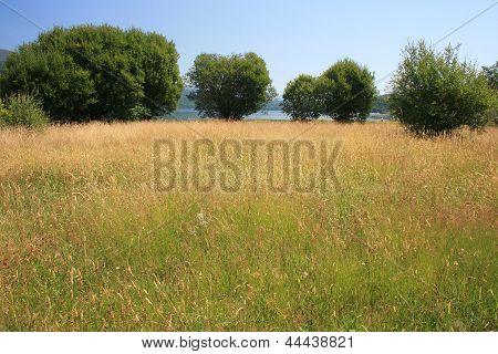 Vegetation of the Natural Park of Lake Sanabria, Zamora