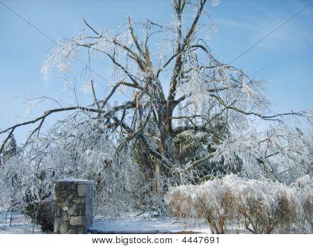 January '09 Ice Storm - Paducah, Ky