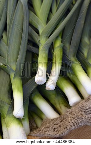 Close up picture of bunch freshly picked leeks