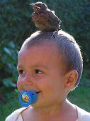 bird balancing on boys head poster