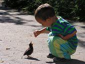 young boy feeding a blackbird on a summer day poster