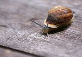 A snail is moving slowly across a plank of wood poster