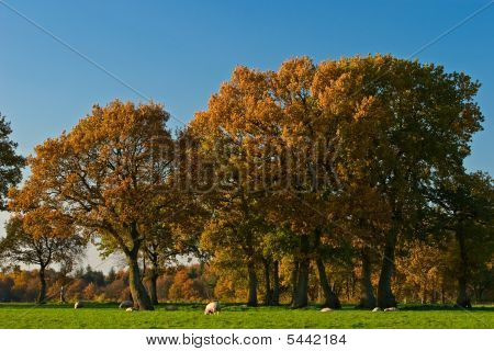 Landscape of a farmland with colorful autumn trees on a sunny day poster