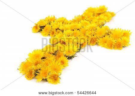 Christian Dandelion Flower