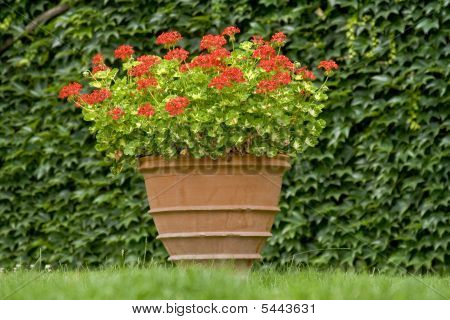 Flowers In Pot On A Grass