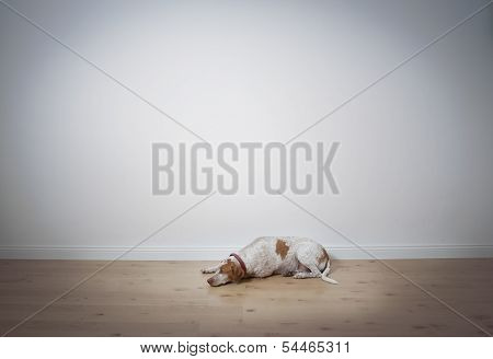 Dog Lying On Floor Space For Text