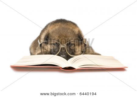 Reading Puppy