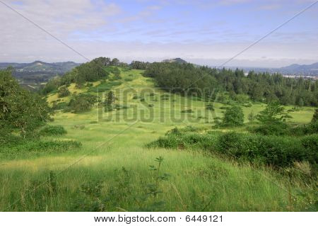 Grass Hill With Trees On top Of Mount Pisgah, Oregon