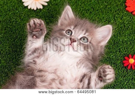 Cute gray kitten on artificial green grass poster
