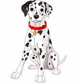 Illustration of a cute Dalmatian dog wearing a red collar poster
